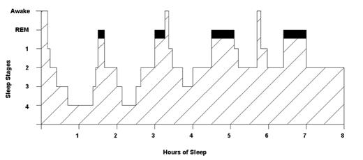 sleep_overview_jim_horne
